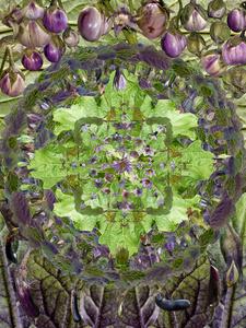 Eggplant Mandala