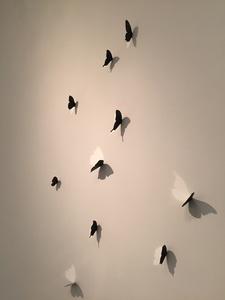 Butterflies (10)