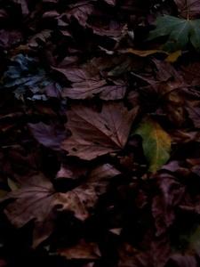 Autumne(Redux)