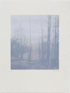 Landscape 42