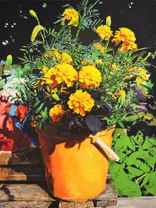 Flowers(Y)