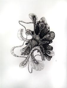 Anemonea