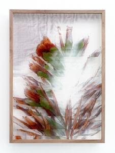 Botanical Frottage - Maria (Oaxaca series)
