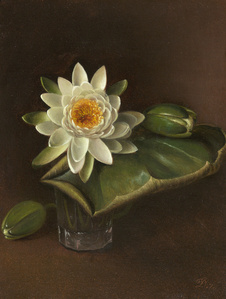 Still Life with Water Lily