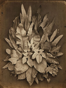 Untitled (study of leaves)