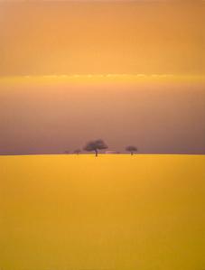 Niebla Amarilla