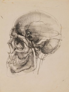 Skull in Profile, circa
