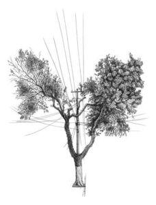 Árvore nº 3