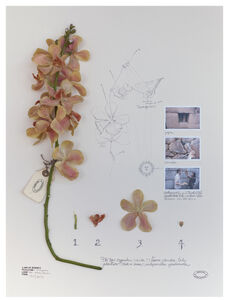 Expedição Machu Picchu: Orquídea Vanda Crema