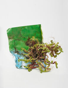 Sedum Acre L.ona Plastic Packaging, from the cycle Center for the Living Things