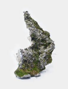 Barbulaungniculata, Caratodonpurpureus, Bryum caespiticium, Barbula convoluta on Cellulose, Polystyrene