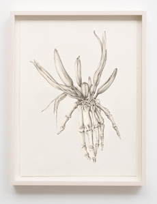 Untitled (Skeleton Lily)