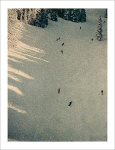 Aspen #10