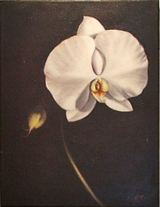 Untitled (Orchid)