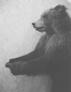 Tolstoy's bear, Moscow