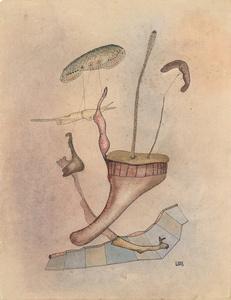 """""""Corolles de champignons volants"""""""
