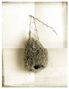 Round Weaver Bird Nest