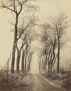 Road and Trees with Hoarfrost