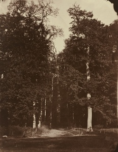 Forest at Saint-Cloud