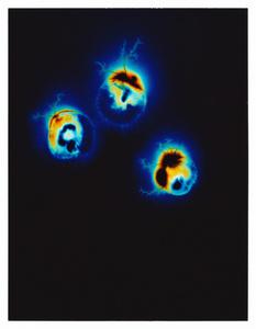 Unseen Potential (Yopo - Anadenanthera Peregrina)