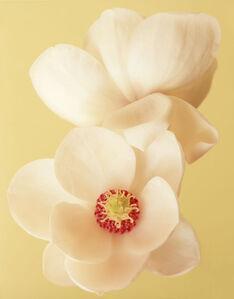 Magnolia (CSL 039)