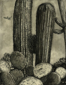 Nest in Saguaro