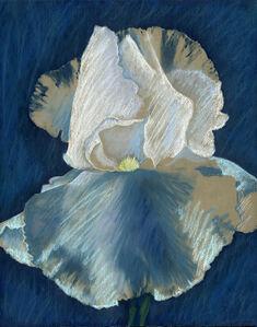 Iris with Soft Pastel #1 (Diana)