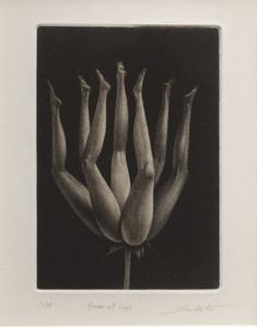 Flower of Legs