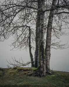 From the series Darkwood, #3