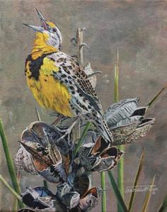 Country Western Song - Meadowlark