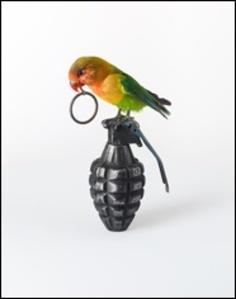 Bird on Hand Grenade