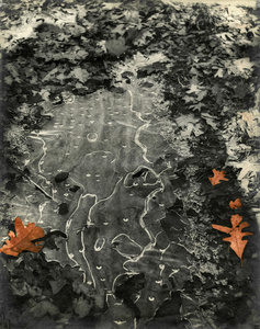 Abstraction (Thin Ice In The Woods)