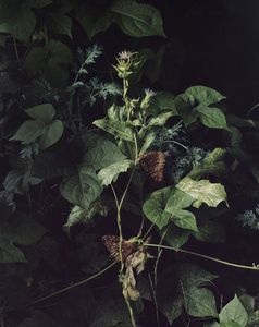 Untitled 3 (From the Series Understory)