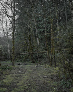 From the series Darkwood, #8