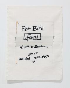 Pet Bird Found, 16th and Sanchez