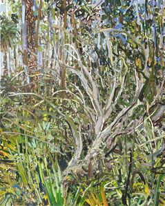 Juniper and Palms