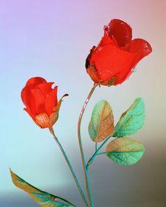 Moods (rose)