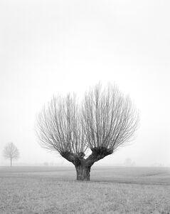 Untitled 017, Questa Pianura series