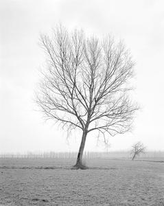 Untitled 012, Questa Pianura series