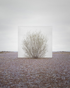 Tree...#5