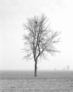 Untitled 013, Questa Pianura series