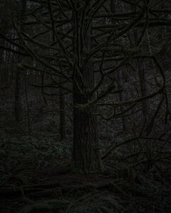 From the series Darkwood, #23