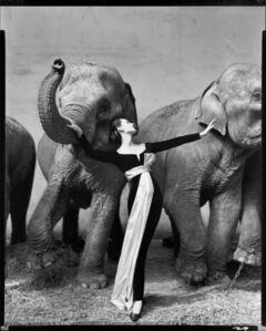 Dovima with Elephants, Evening Dress by Dior, Cirque d'Hiver, Paris, France