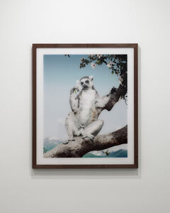 Untitled #169 (Lemur)