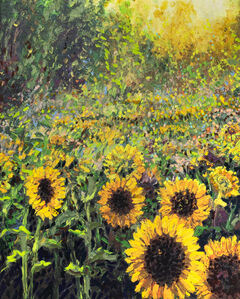 Helios Sunflower