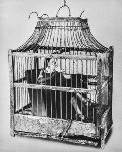 Sueño Nº 45, Birdcage
