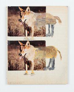 Double Coyote
