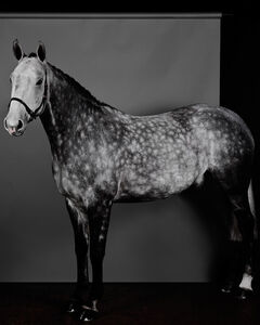 Horse (Profile) (Dapple Grey) (I)