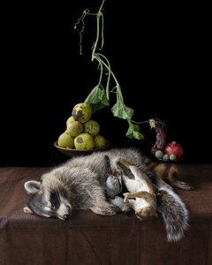 On Ripeness And Rot #10 (Raccoon)