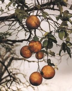 Orange Grove #4 1/5